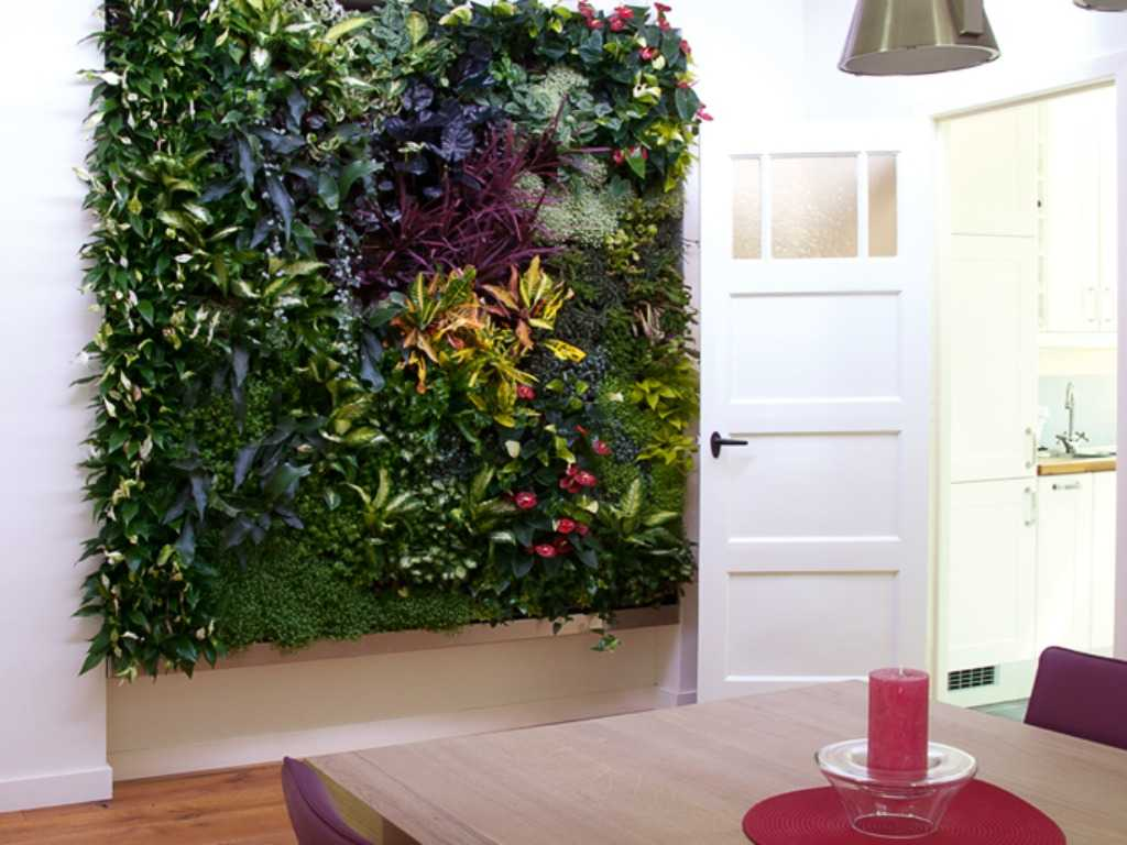 Levende plantenwand Gouda