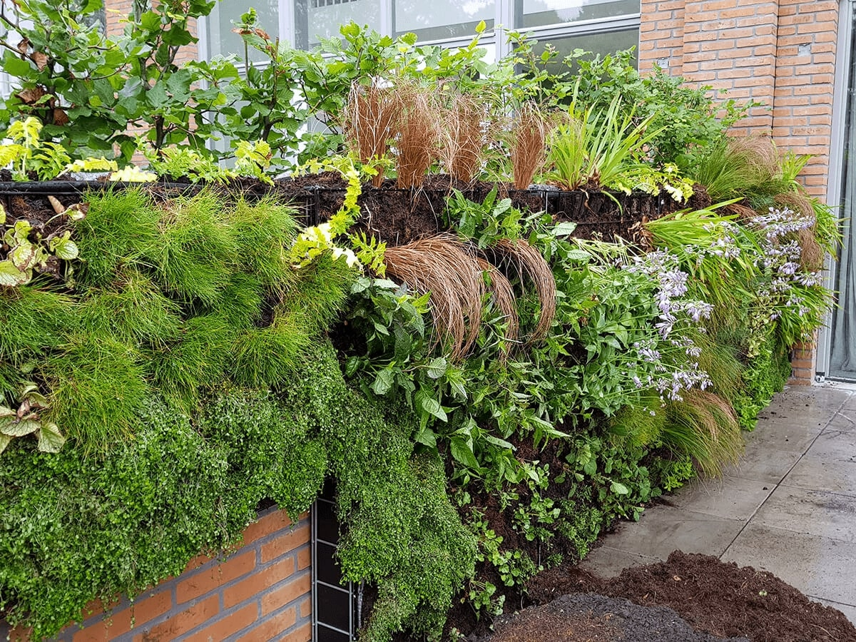 Verticale plantenwand Amsterdam