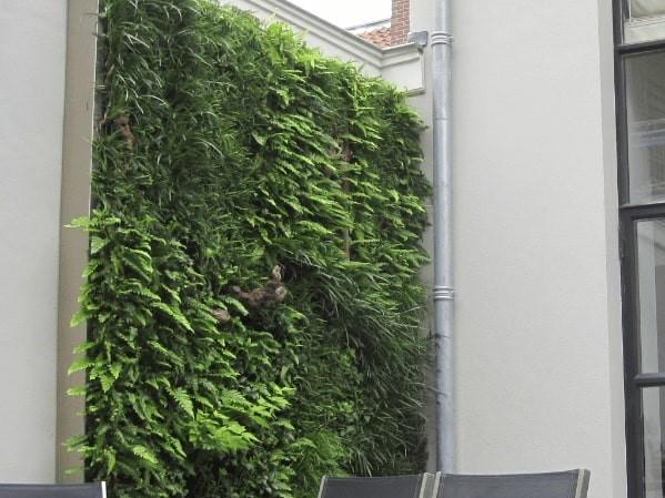 Groene muur Amsterdam