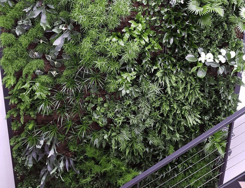 Plantenmuur in Brabant